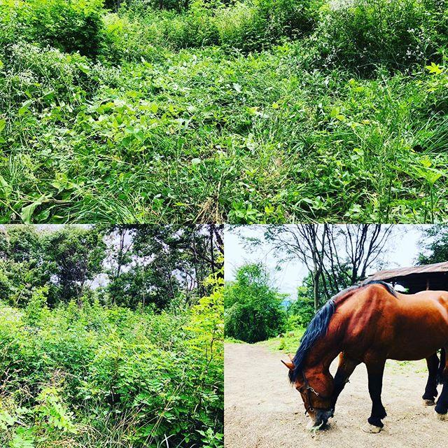 草を踏みしめて居場所の確保。 #無人島開拓している気分 #ヤマト牧場 #ブッシュクラフト #雨の日