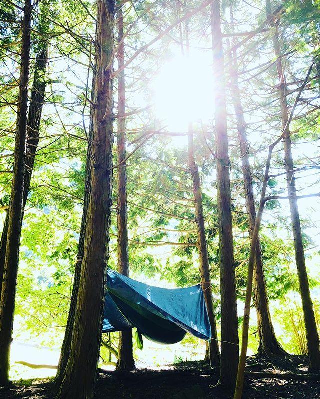 おはようございます。#WAN1 #ハンモック #朝 #森