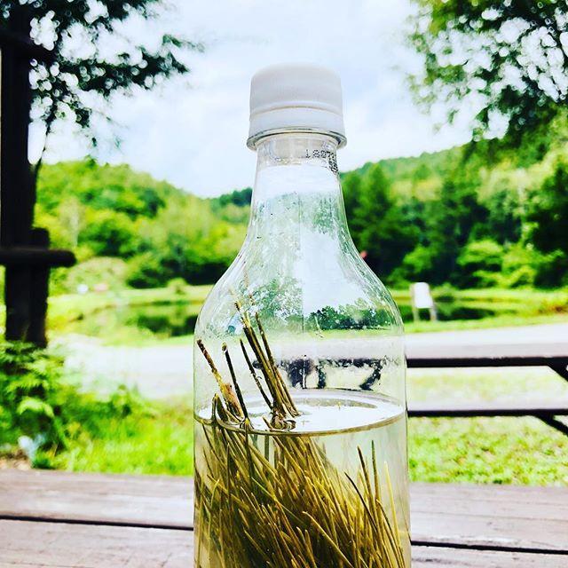 封入から4日経った #松の葉 水松の葉の爽やかさと、薬味を感じる。濁ってきたけど飲んで良いのか?これ。