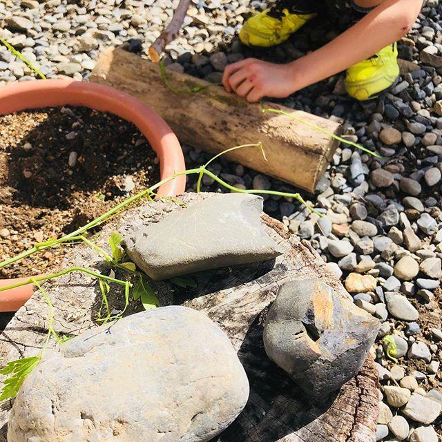 お庭の石で #石器 。作りたくなるよねー。今週末は5人ぐらいやっているのでは。