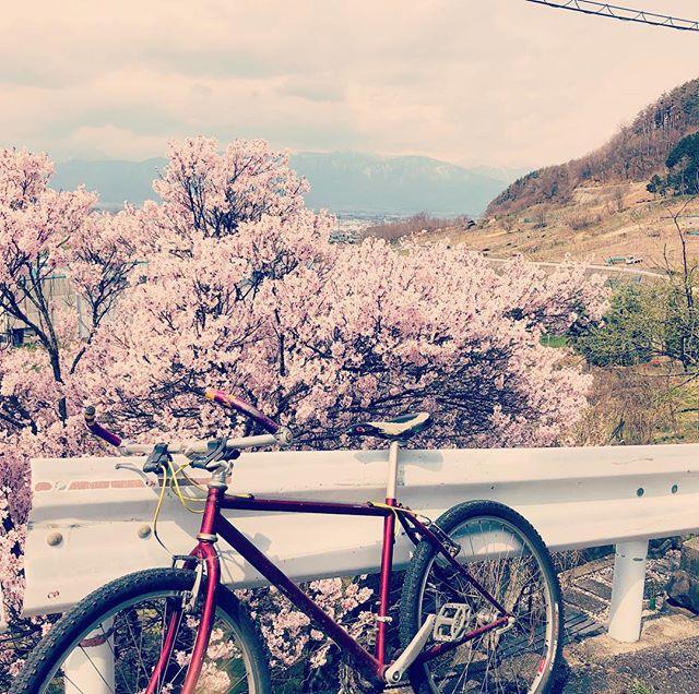 今日は自転車で森遊びへ向かってます。