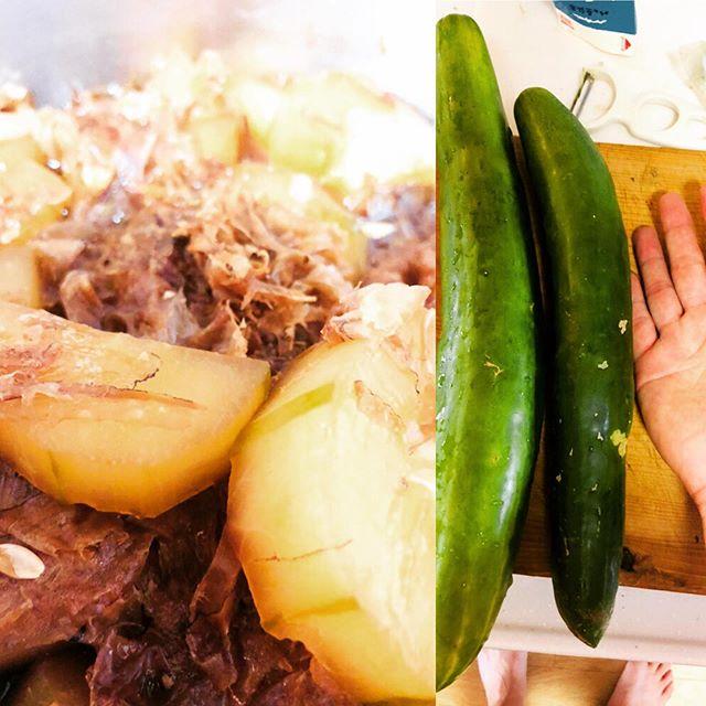 きゅうりって、煮るとちゃんと煮物になるんですね。#きゅうり #料理 #煮物