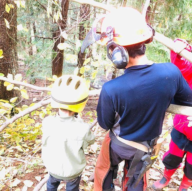 森で伐採体験