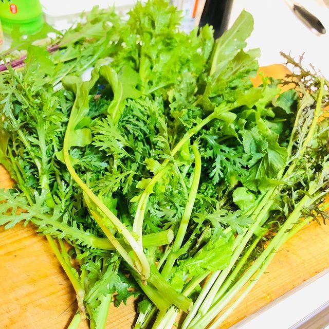 今日も無農薬香味野菜とベーコンを合わせ炒め。
